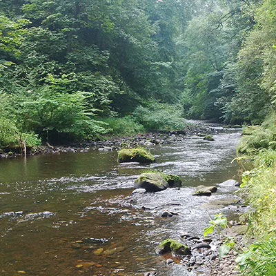 River North Esk flowing through Roslin Glen